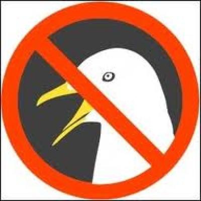 Anti seagull